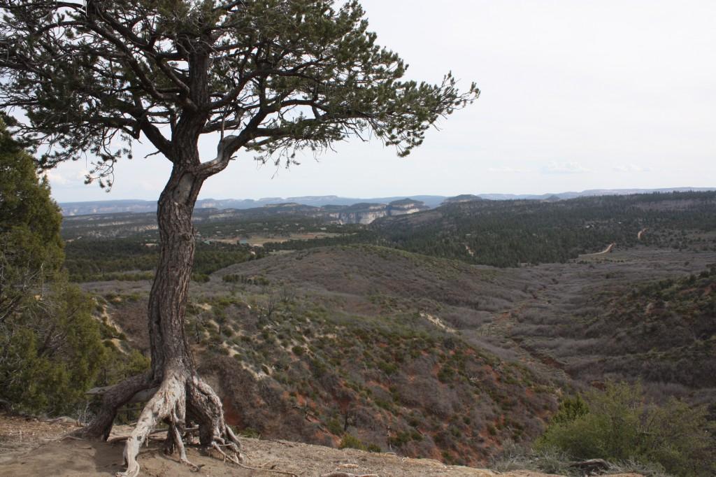 Pine Knoll view of Zion Ponderosa Ranch Resort