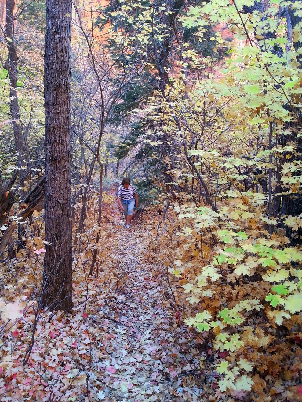 Zion National Park Hikes - Taylor Creek