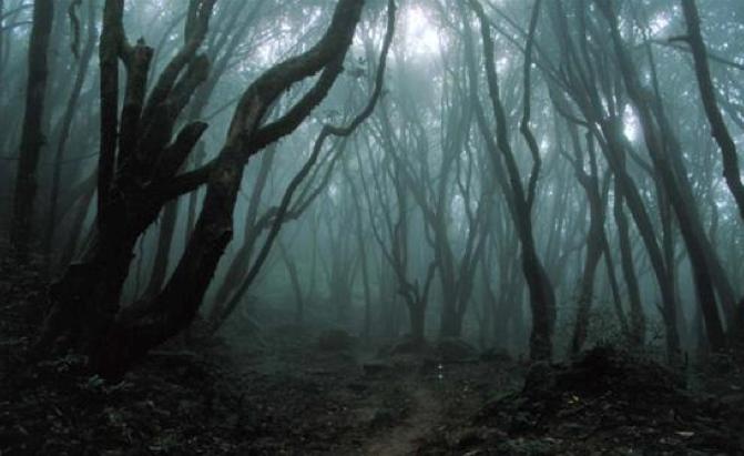 Spooky forest ATV tours Jeep Tours Zion Ponderosa
